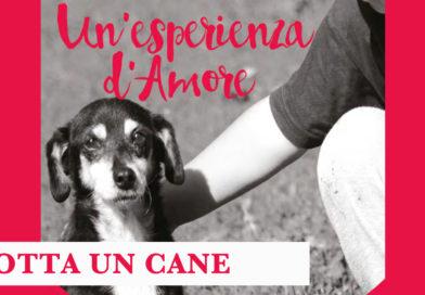 Tivoli – Adotta un cane con l'Associazione Love For Animals